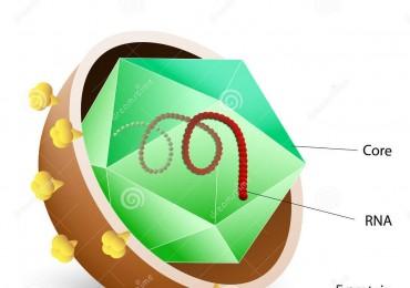 Epatite C, Campania modello virtuoso per l'implementazione delle nuove terapie
