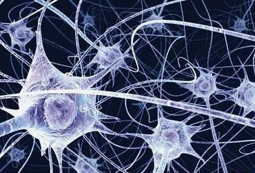 Ricercatori italiani individuano un meccanismo di protezione dei neuroni
