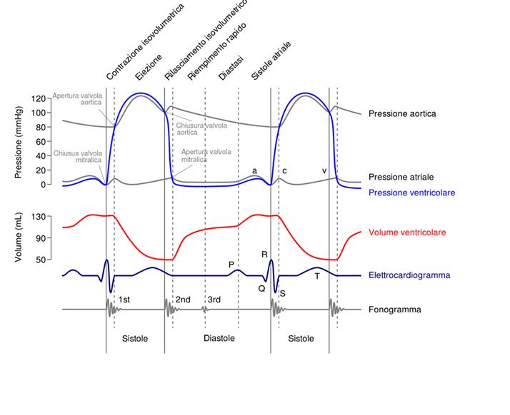 Il diagramma di Wiggers: semplice strumento di analisi fisiologia cardiaca
