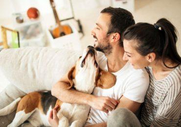 Infarti e malattie cardiache: per i proprietari di cani il rischio di morire è minore