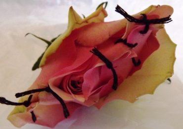 L'Ordine di Firenze-Pistoia aderisce alla Giornata mondiale contro le mutilazioni genitali femminili
