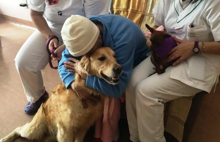 Cremona, gli animali domestici potranno stare accanto ai pazienti