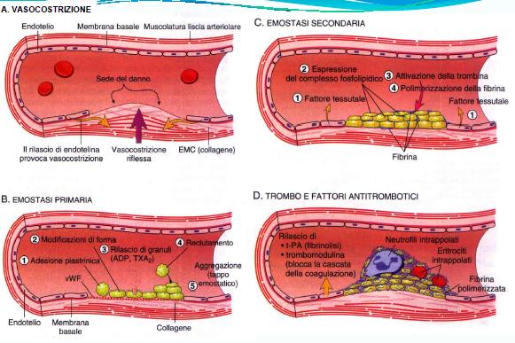 Emostasi e test della coagulazione. Pills 1