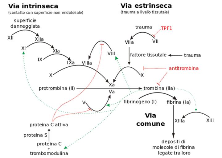 Emostasi e test della coagulazione. Pills 2
