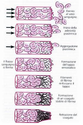 Emostasi e test della coagulazione. Pills