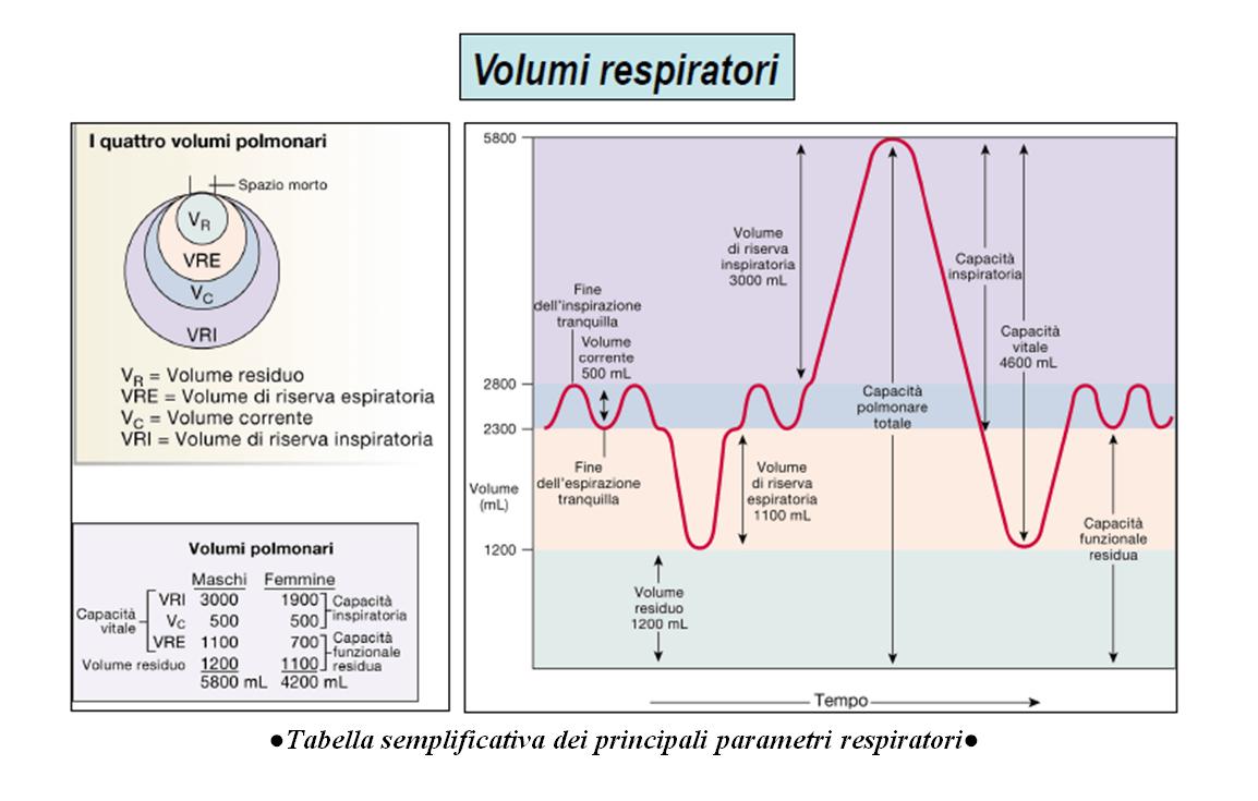 Il monitoraggio dei parametri respiratori con l'ausilio del ventilatore meccanico 1