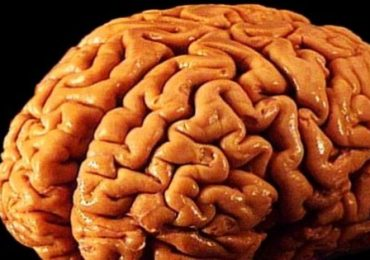 Riprodotto il primo cervello umano