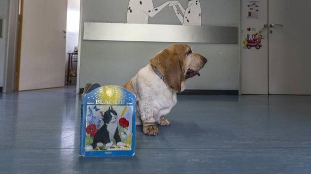Il cane Serena accompagne