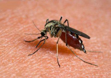 Nuova epidemia da zanzara killer