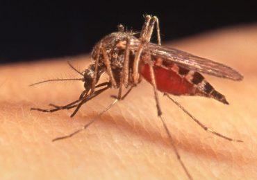 Virus West Nile, torna l'allarme nel Veneziano