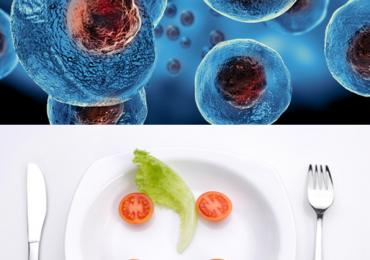 Digiuno e cellule staminali: connubio di lunga vita 2