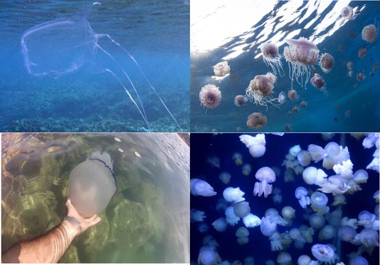 I rimedi dopo contatto con medusa 1
