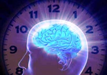 Cervello, scoperto l'orologio biologico che mette in ordine le esperienze