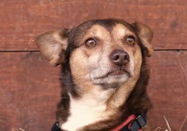 """Budino, il cane da pet therapy che non vuole andare in pensione: """"Non accetta di non lavorare"""""""