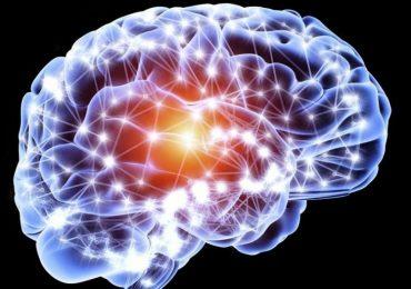 La forza del cervello umano: può produrre neuroni fino ai 90 anni