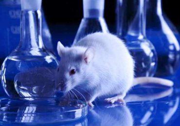 Nasce il gruppo di lavoro per promuovere metodi alternativi alla sperimentazione animale