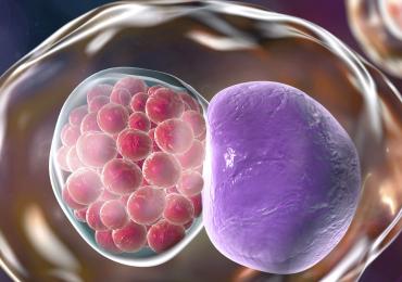 Vaccino anti Clamydia: risultati incoraggianti