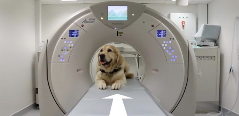 Pet Therapy: i Golden Retriver mostrano ai piccoli pazienti come sottoporsi alla risonanza magnetica