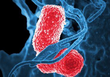 """Corso Ecm Fad Gratuito """"Introduzione al fenomeno dell'antibiotico resistenza e al suo contrasto"""""""