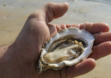 Francia, rischio di contaminazione da norovirus: molluschi ritirati dal mercato