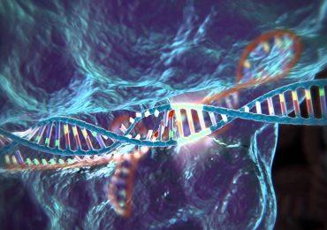 Malattie genetiche, nuova tecnica corregge difetti di inetrei comosomi.