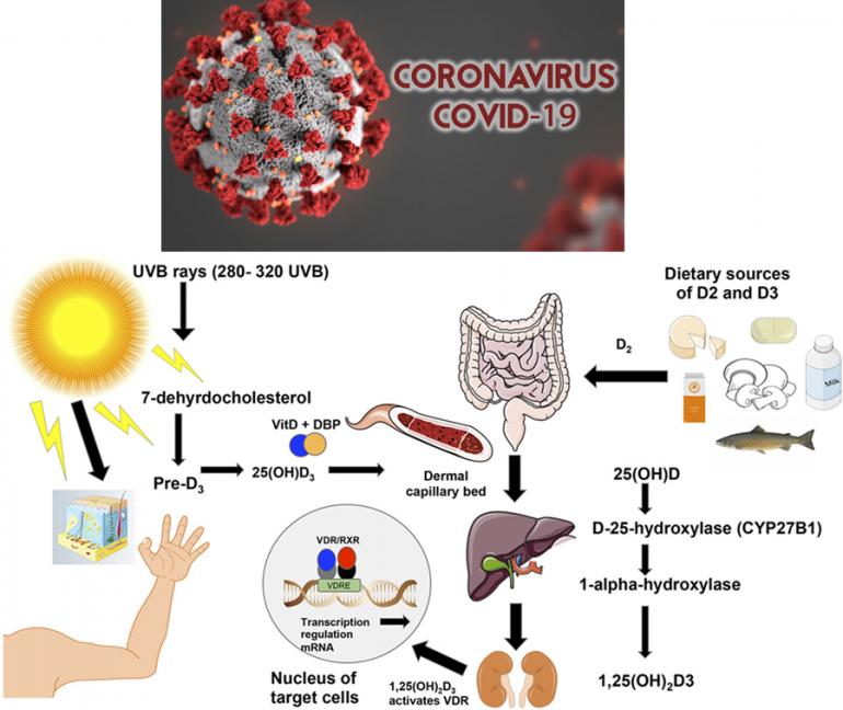 Vitamina D contro il Coronavirus?