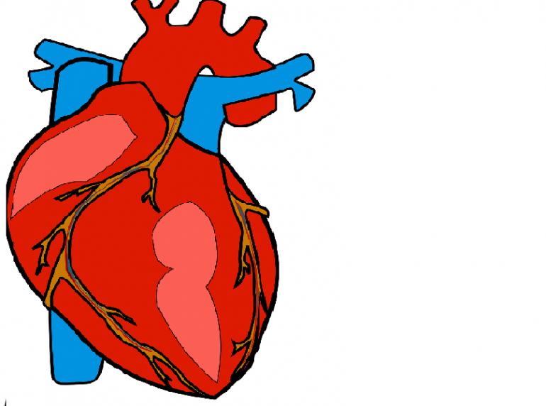 Scoperta l'origine dei tumori del cuore