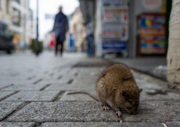 """Hong Kong, """"salto di specie"""" per l'epatite E: può contrarla anche l'uomo"""