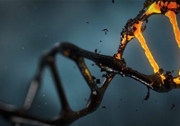 ZNF398, il gene che rivoluzionerà la medicina rigenerativa