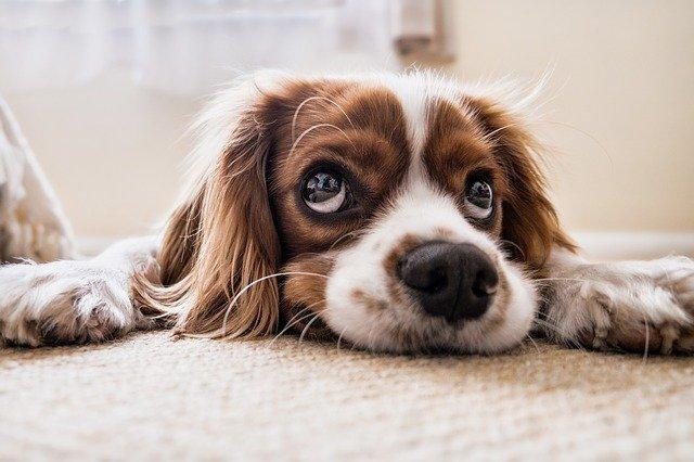 Ai dipendenti degli ospedali  60mila pasti per i loro animali domestici