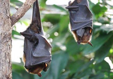 Bimba svedese graffiata da un pipistrello: salvata a Foggia