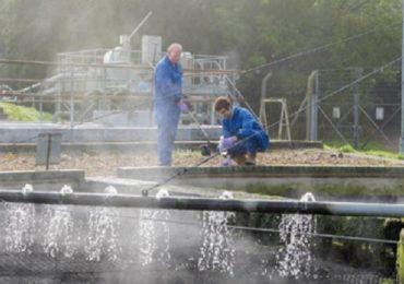 Coronavirus, al via il progetto di sorveglianza attraverso le acque reflue