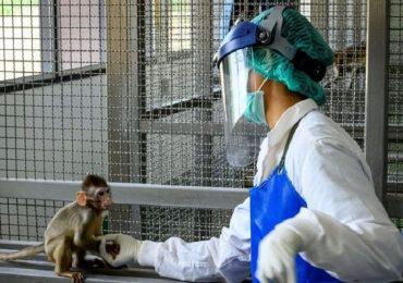 Coronavirus, risultati incoraggianti dal vaccino sperimentato sui macachi: via alla fase 3