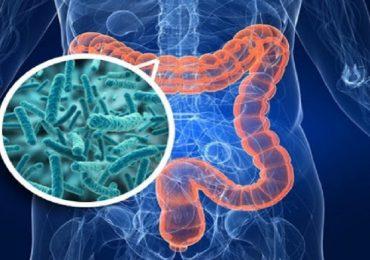 Diabete di tipo 2: nuove opzioni di prevenzione e trattamento dal microbiota intestinale