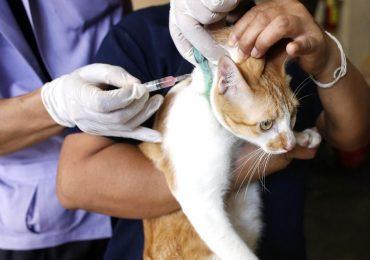 Lyssavirus, muore gatto ad Arezzo: il ministero della Salute spiega come comportarsi