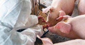Cina, paura per un nuovo ceppo di coronavirus