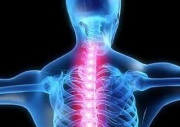 Lesioni spinali, le staminali del midollo possono indurre la riparazione