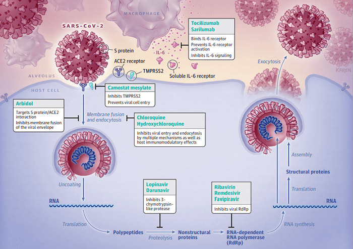 Successo per Anticorpi monoclinali e COVID-19: lo studio