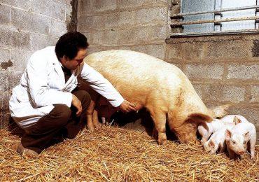 """Covid-19:""""Anche I veterinari potranno fare tamponi ai cittadini del Veneto"""""""