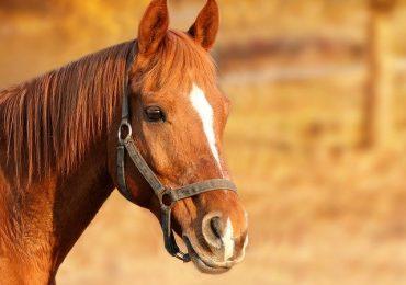 farmaci per dopare i cavalli