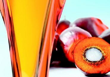 Olio di palma, è davvero dannoso per la salute?