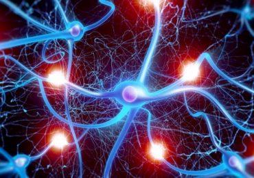 Neuroni di nuova generazione: studio svizzero ne spiega la riduzione con l'avanzare dell'età