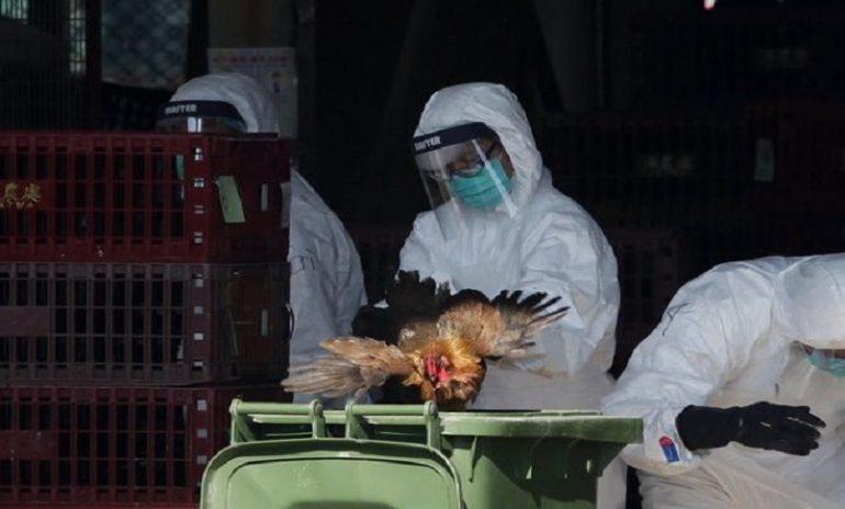 Russia, rilevati 7 casi di influenza aviaria H5N8