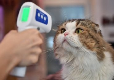Coronavirus, variante inglese individuata in un gatto nel Novarese