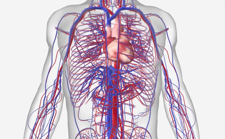 Covid: danni sul sistema cardiovascolare