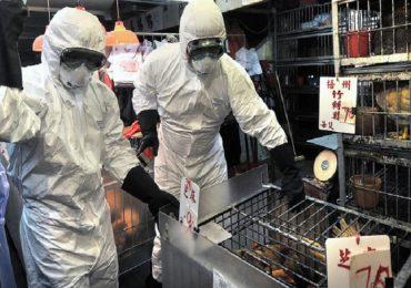 Cina, raro ceppo di influenza aviaria riscontrato in un uomo