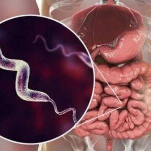 Infezione da Campylobacter: possibile la trasmissione per via sessuale