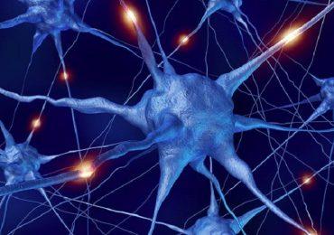 Sla e demenza frontotemporale, scoperto possibile biomarcatore per diagnosi precoce