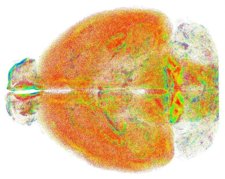 Studio del cervello: sviluppata una nuova tecnica dall'Università di Firenze