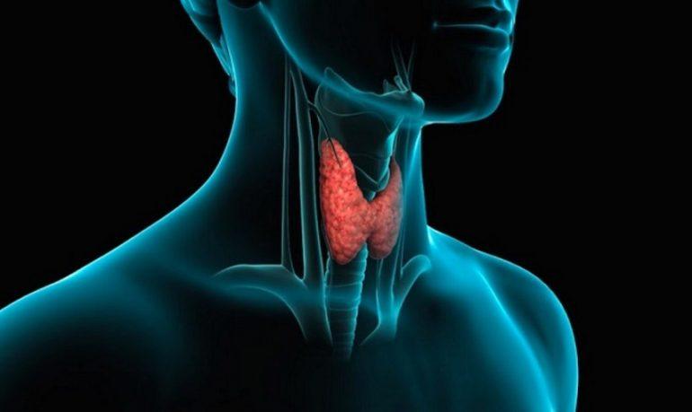 Disfunzioni della tiroide: come curarle